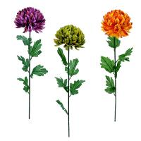 Chryzantéma, 80cm_1