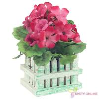 Muškáty v záhradke - ružové, 20cm_1