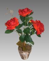 Tmavočervená ruža v kvetináči_1