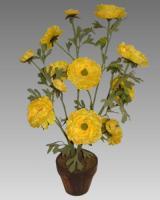 Žltý iskerník v kvetináči_1