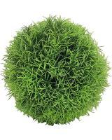 Buxusová guľa - asparágus, od 13cm_1