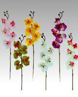 Orchidea, 50cm / 12ks_1
